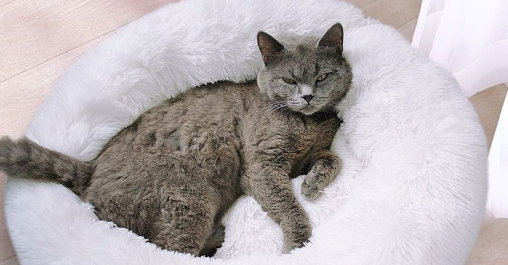 Coussin apaisant chat